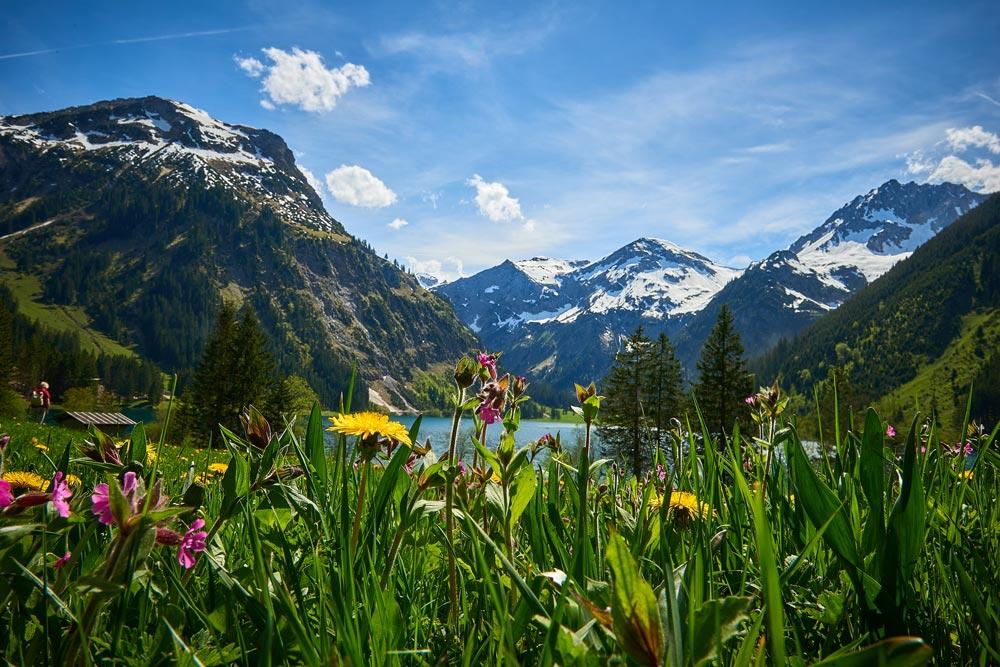 Vilsalpsee im Tannheimer Tal mit Blumenwies und Bergkulise im Frühling